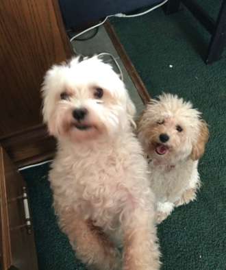 Day 127: They think they are entitled to some of my food