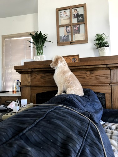 Day 128: Nala is standing guard against the scary things outside the window